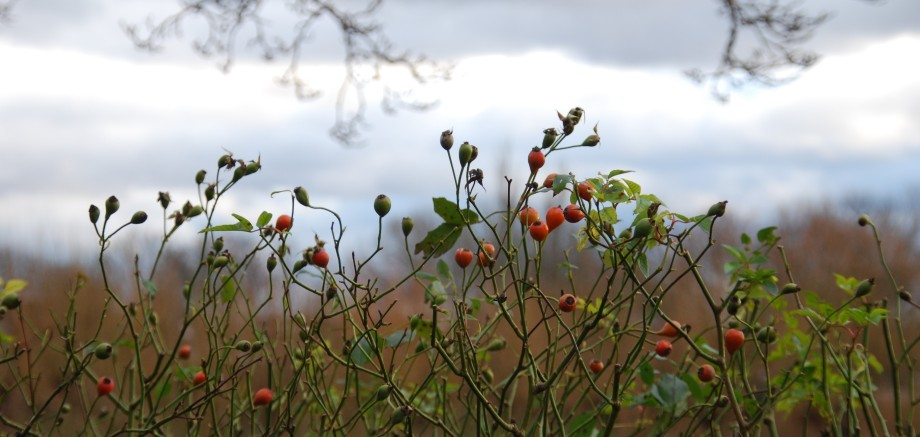 new year crop.jpg